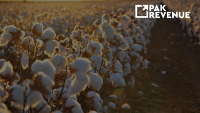 Photo of EEC has Finally Allowed the Duty-Free Import of Cotton