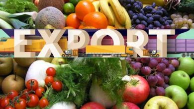 Photo of Pakistan's Fruits & Vegetables Exports Witnessed a Major Growth Despite the Pandemic