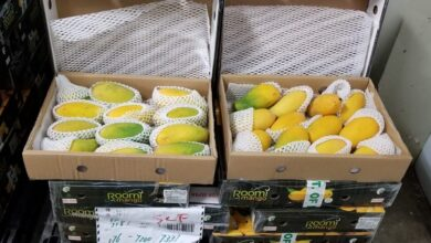Photo of Pakistan's Mango Exports Exceeds the 2020 Target despite the Pandemic
